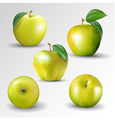 yellow apple collection set of fruits and leaf vector image
