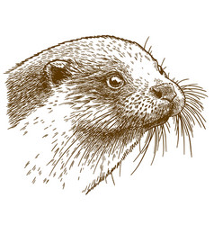 Engraving of otter head vector
