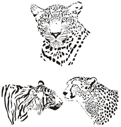 Head of cheetah leopard and tiger vector