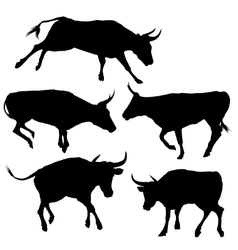 Collection of Bull Silhouette vector image