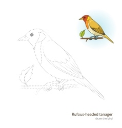 Rufous headed tanager draw vector