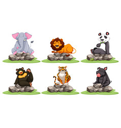 different types of wild animals on rocks vector image vector image