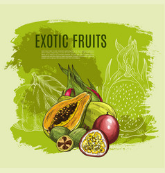 exotic fruit sketch poster for food drink design vector image vector image