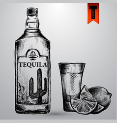 bottle tequila with lime and glass painted by vector image