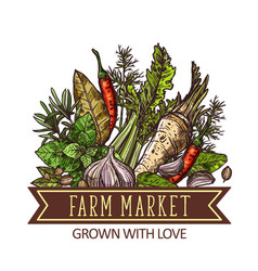 farm market herbs spices and vegetable vector image