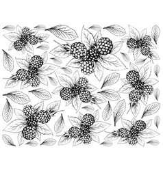 Hand drawn of dewberries on white background vector