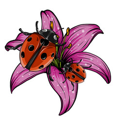 ladybugs in garden red vector image