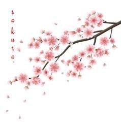Pink sakura flowers isolated on white EPS 10 vector image