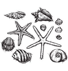 Selection of sea shells drawings vector