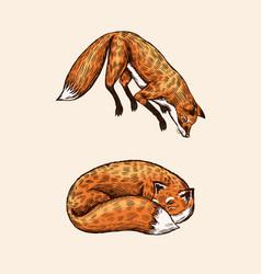Wild red fox forest ginger animal flying vector