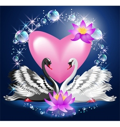 Black and white swans and heart vector image