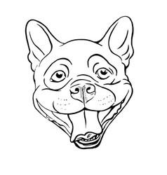 boston terrier vector image
