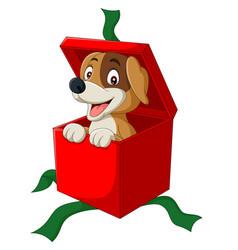 cartoon dog peeking out red gift box vector image