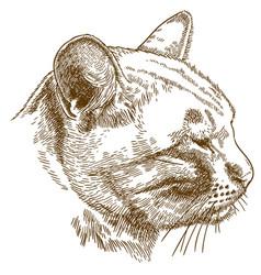 Engraving of cat head vector