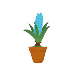 hyacinth with blue blooming flower and green vector image