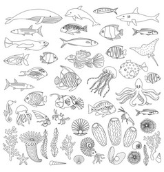 sea fish and plants coloring outline set vector image