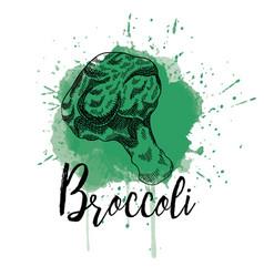 a brocoli hand drawn image vector image