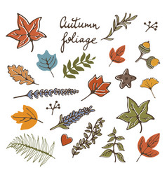 Autumn foliage stylash elements collection vector