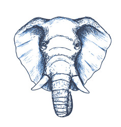 elephant head sketch wild animal vector image