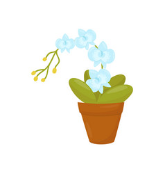orchid with gentle blue flowers and green leaves vector image