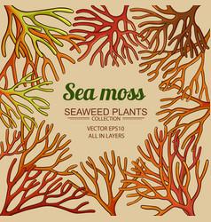Sea moss frame vector