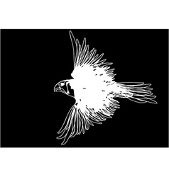 white bird vector image