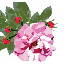 Delicate pink rose isolated vector