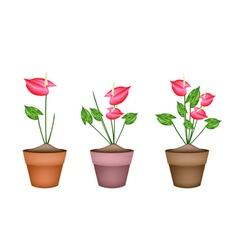 Anthurium flowers or flamingo lily in ceramic pots vector