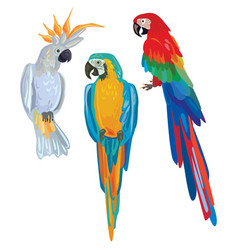 cartoon parrots vector image