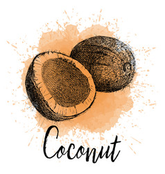 coconut in hand drawn graphics vector image