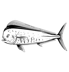 Common dolphinfish black and white fish vector
