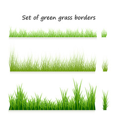 set green grass borders isolated on white vector image