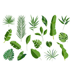 Set of tropical leaves different green leaf vector