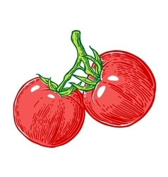 Tomato bunch engraved vector