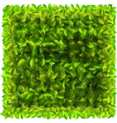 Background with fresh green leaves EPS10 vector
