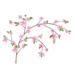 Branch peach with blooming flowers vector