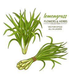 lemongrass set vector image