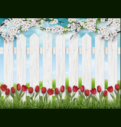 spring landscape with tulips and fence vector image vector image