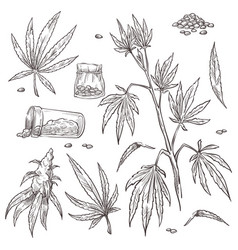 alternative medicine cannabis plant and marijuana vector image
