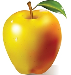 Yellow apple with green leaf vector