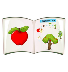book of apple life cycle vector image