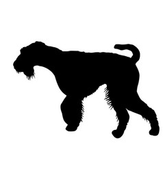 Airedale terrier dog silhouette on a white vector