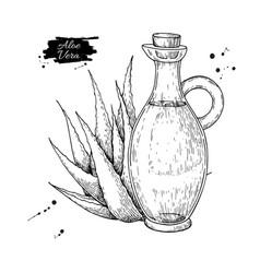 Aloe vera juice in pitcher bottle hand drawn vector