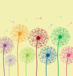dandelion colorful vector image