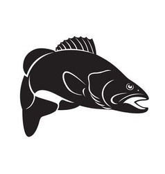 fish bass vector image vector image