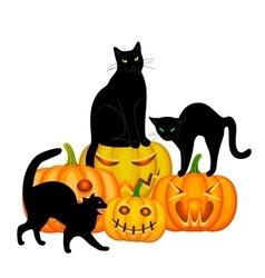 Cats and pumpkin vector image vector image
