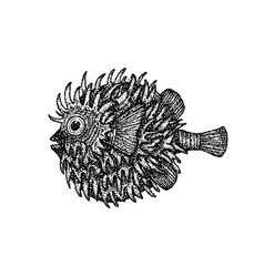 dotwork fish hedgehog vector image