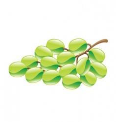 Grapes illustration vector