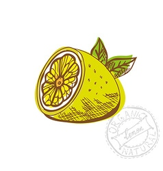 hand drawn lemon fruit vector image