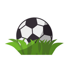 soccer or football sport vector image